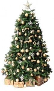 Hampshire Christmas Tree rental