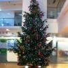 Christmas Tree Hire Farnham